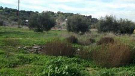 Plot for sale/Mazotos